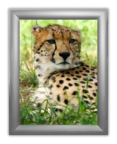 """Trappa 2-7 Snap-Edge Poster Frame Kit with Graphics 22""""W x 28""""H"""